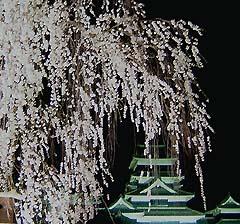 国宝松本城 夜桜会(例年4月開催)