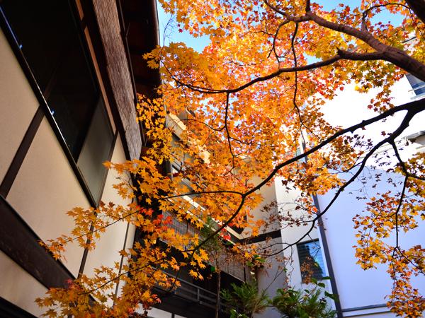 秋の爽やか信濃路へ!周遊ツアーのご案内です。